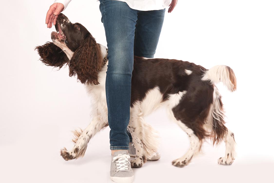 Was Hunde für uns tun können. Und wir für sie.