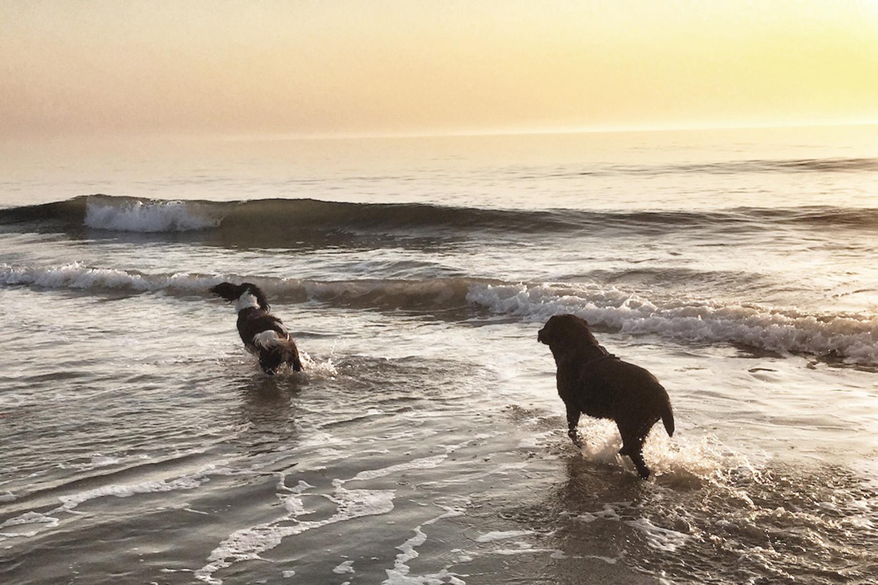 Wenn das Leben hohe Wellen schlägt.