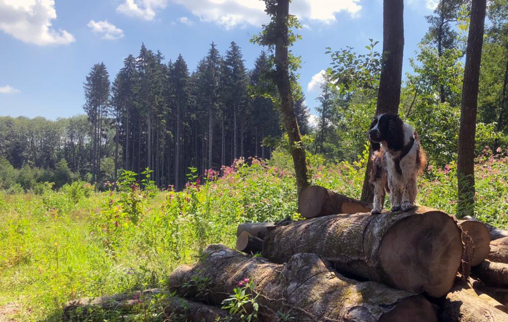 Hund und Mensch. Eine Beziehung mit Wachstumspotential.