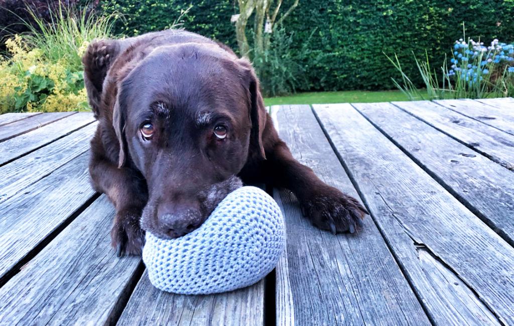 Snoops-to-go – Hundesachen einfach selber machen.